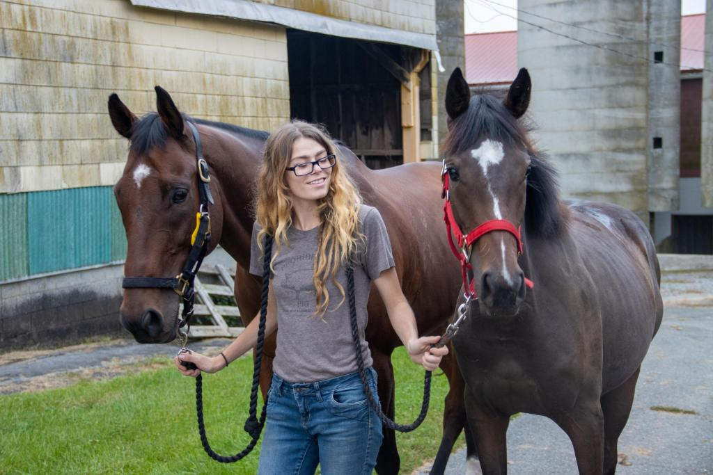 A gelding and a yearling are led out of the stables by a young woman between them.