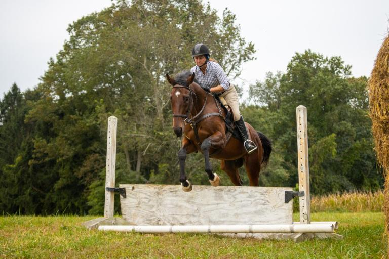 Former thoroughbred racehorse for sale, Night Vigil, is jumping over a wooden barrier.