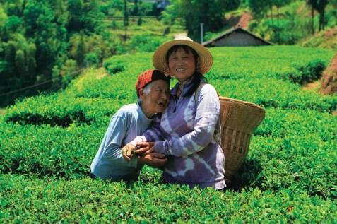 I sorrisi delle raccoglitrici della regione cinese di Hubei