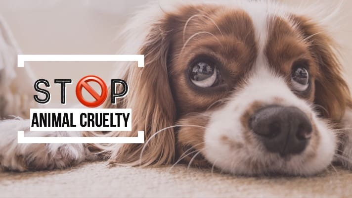 Voice for the Voiceless – Recent Animal Cruelty Incidents