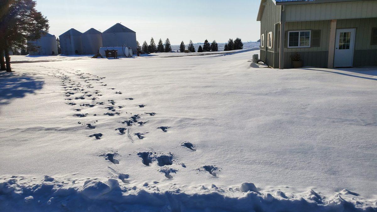 2-20-21 Deer In Snow