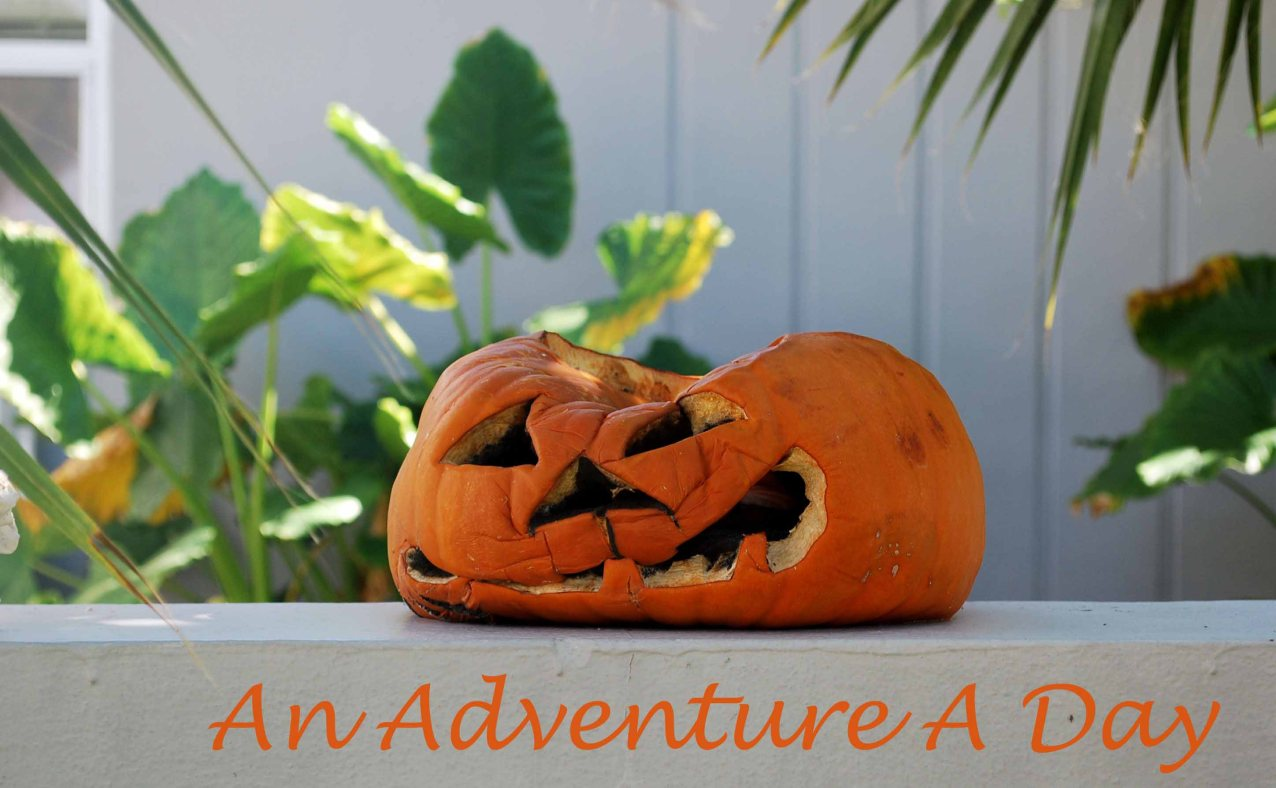 This is what happens when you carve your pumpkin before Halloween in the tropics