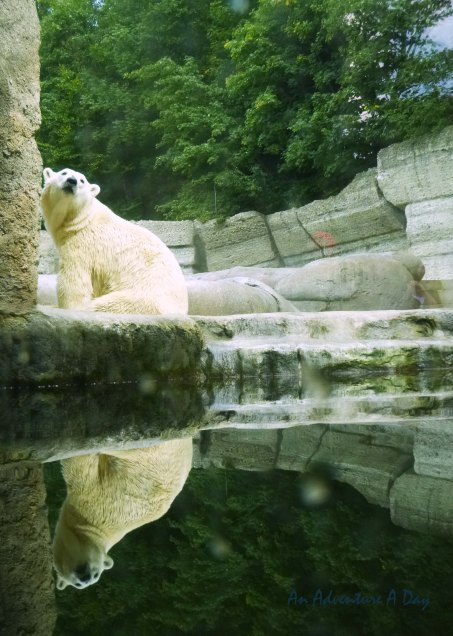 Polar bear in Munich's Tierpark Hellabrunn