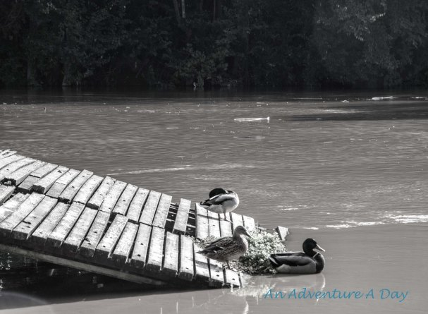 The constant movement of the water makes a walk along the Tiber a great place to recharge.