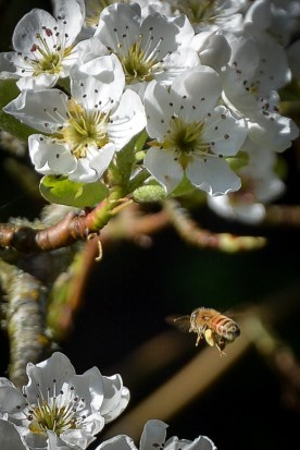 04-06-14_art_insect_honey_bee