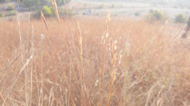 Even the grass seems taller than the hill