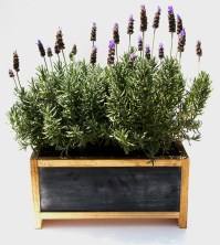Planter Box Herb Garden | Garden Design Ideas