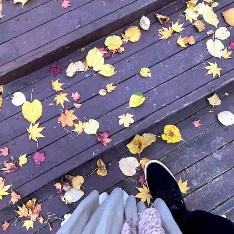 autumn leaves on a wooden walkway