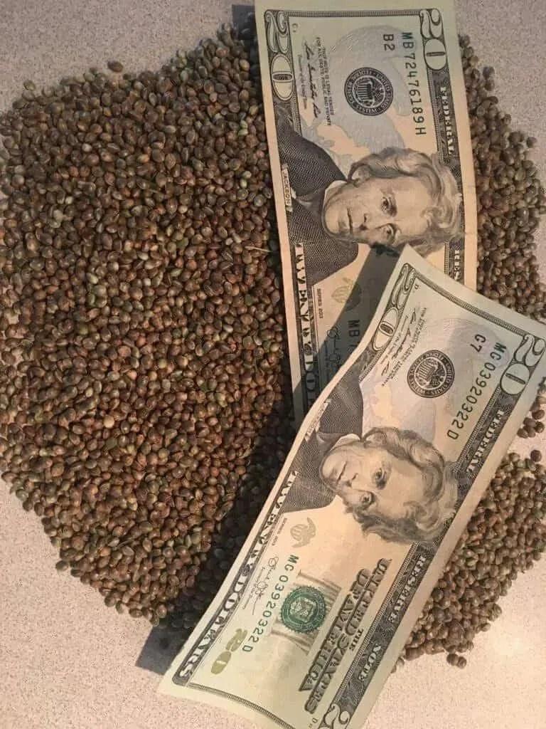 Buy Cannabis Seeds Online