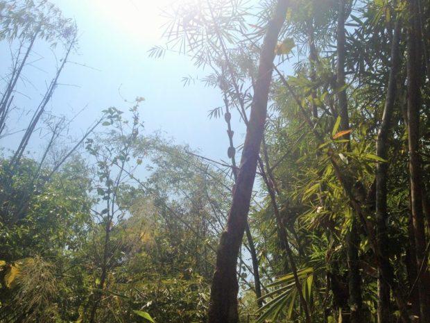 Thailand_Jungle_Kanchanaburi