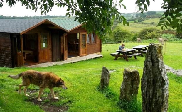 Alpaca Farm Cabin Cork Ireland