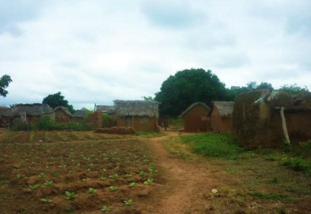 rural_ghana_agriculture_village