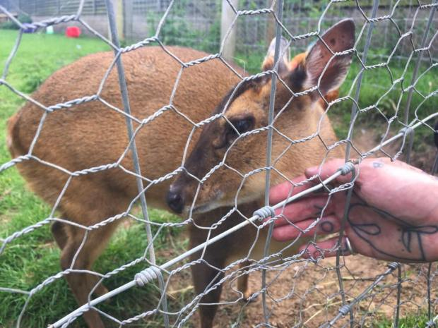 hillside_animal_sanctuary_west_runton_deer