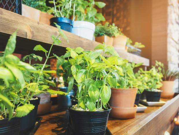 indoor herb planters
