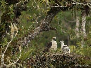 eagle&child