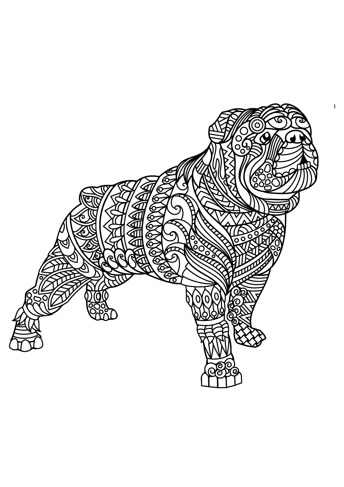 Bull Dog Coloring Page : coloring, Download, Bulldog, Coloring, Pages