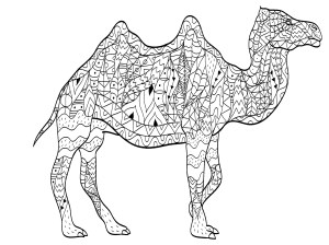 coloring camel adults camels pages drawing simple patterns adult illustration animal animals justcolor dromedaries majestic drawn printable colour muzzle drink