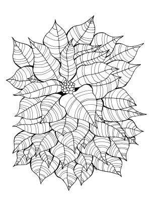 coloring pages adult simple flowers drawing adults vegetation flower leaves et olivier around printable christmas fleurs mandala nature books albanysinsanity
