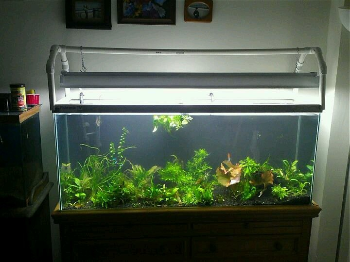 Unusual And Creative Diy Aquarium  Just Craft  DIY Projects