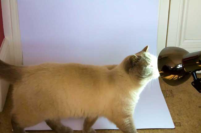 Cat inf Camera