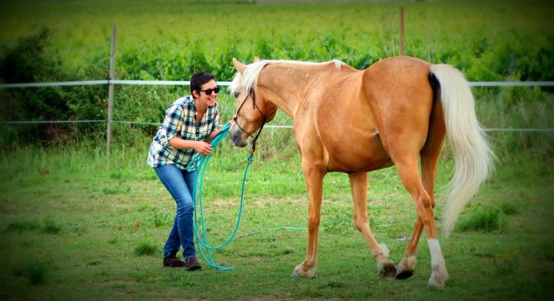 yoyo : un cheval bienvenu