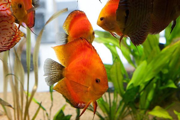 Villa-with-Aquarium-006