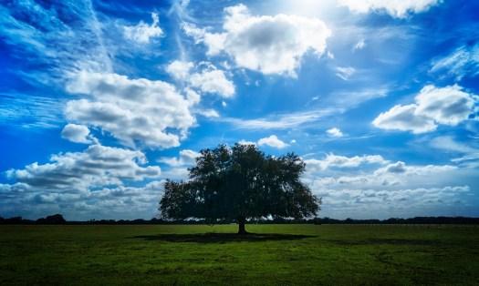 Country Oak