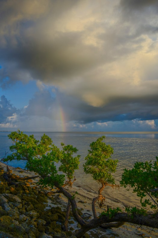 Rainbow on the Coast