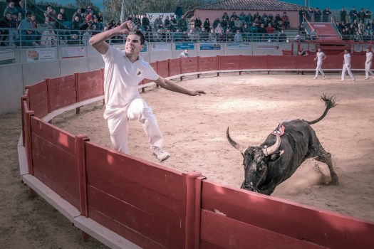 Yesterday we attended a form bloodless bull fighting indigenous to southern France known as Course camarguaise. Long story short, it's an elaborate form of tag played between trained athletes. The athletes are both human and bovine and if you are human you don't want to be tagged by the bull, that would be bad. I had no idea this even existed but the bulls are very well cared for and seem to enjoy chasing the raseteurs (human athletes) around the arena. All in all it was an absolute amazing spectacle, from the agility and speed of the bulls to the outstanding athletic ability of the raseteurs as they flew out of the arena to avoid the bull. Each bull spent about fifteen minutes in the arena after which he trotted back to his pen, in some cases quite proud of himself. Here is a Wikipedia if you are interested: https://en.wikipedia.org/wiki/Bullfighting#French