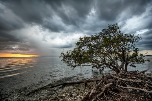 A thunderstorm the other day along the Sanibel Causeway. It's all the more spectacular when the last rays of the sun can peak out during a thunderstorm. By the time I finished taking this the heavens had opened and I ran for the safety of my car.  After it passed it got dark and the skies once again clear up.