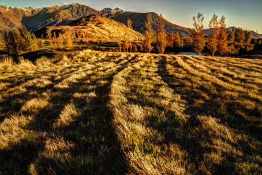 I took this one afternoon near Queenstown in New Zealand just as the sun accentuated the rows in the field. Even after the sun recedes behind the mountains there is still another hour of light so I walked around looking for other interesting things to photograph. I took quite a few though not all interesting. Every week or so I find some other photo I forgot I had. Maybe with time I'm just able to look at it with fresh perspective. In any case, if this were in Florida (not that we have any mountains) then I'd be careful not to step on a snake, but as I understanding it there are no snakes in New Zealand, so you could just lay down in this field and take a nap. However you might wake up to a sheep grazing next you, but I suppose that's not so bad.