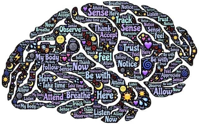 le_cerveau_un_monde_de_possibilités