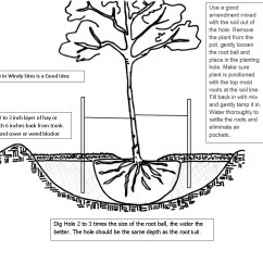 How To Prune An Apple Tree Diagram Marathon Motor Wiring Planting A Correctly  Just Fruits And Exotics