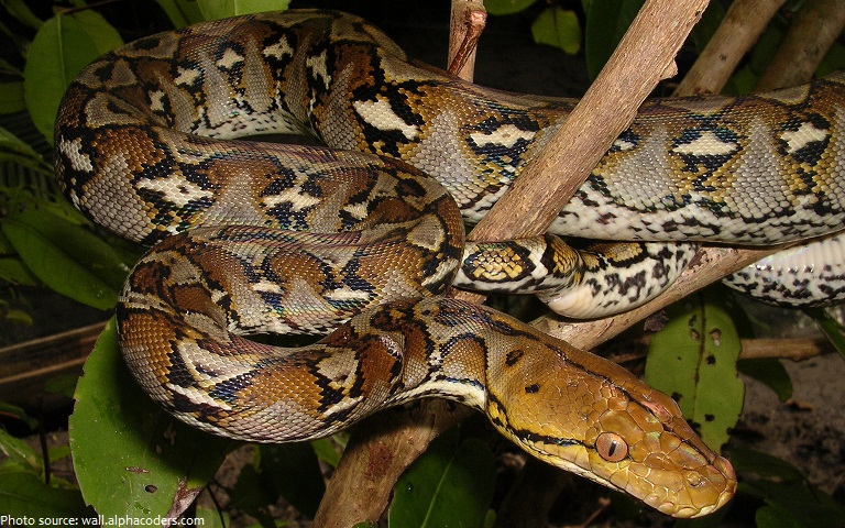Interesting facts about snakes   Just Fun Facts