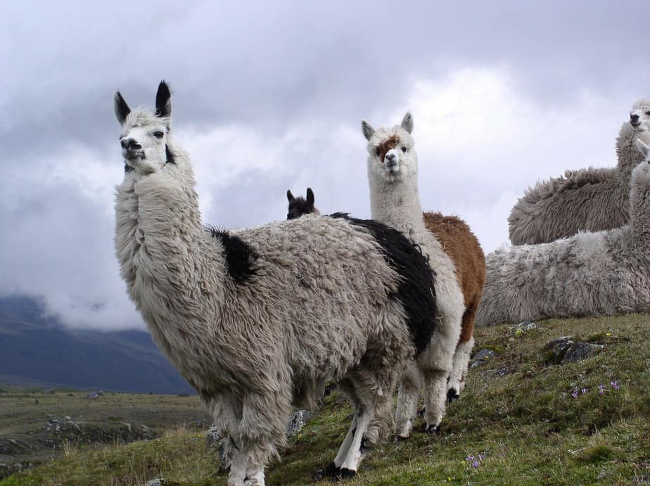 SFO> Quito, Ecuador: Flight & 8 nights: $456- Mar-May