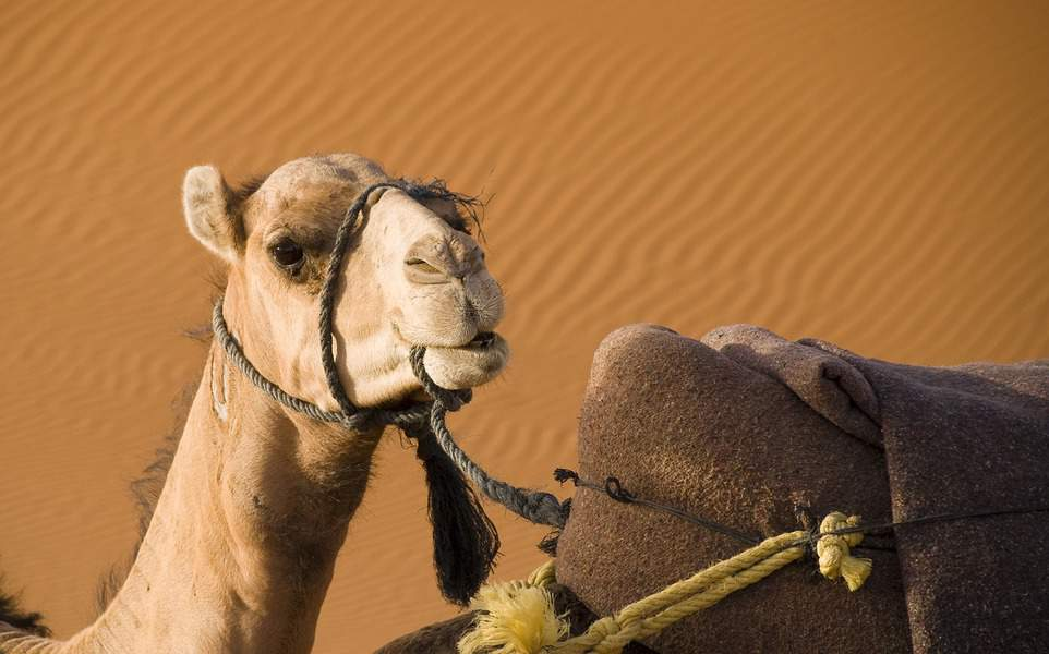 DEN> Marrakesh, Morocco: Flight & 8 nights: $927 – Dec-Feb