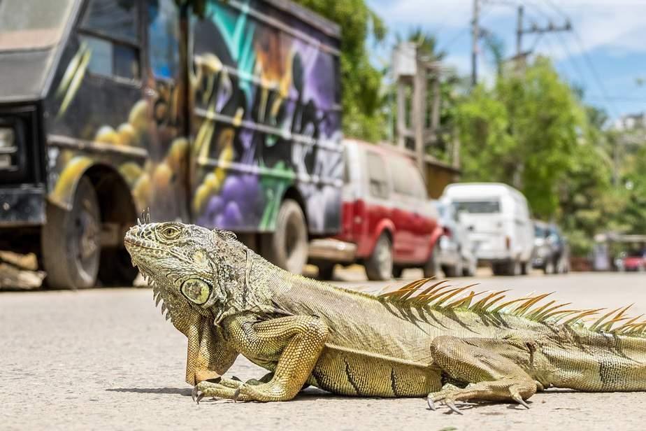 LAX> Mazatlan, Mexico: $302 round-trip – Sep-Nov
