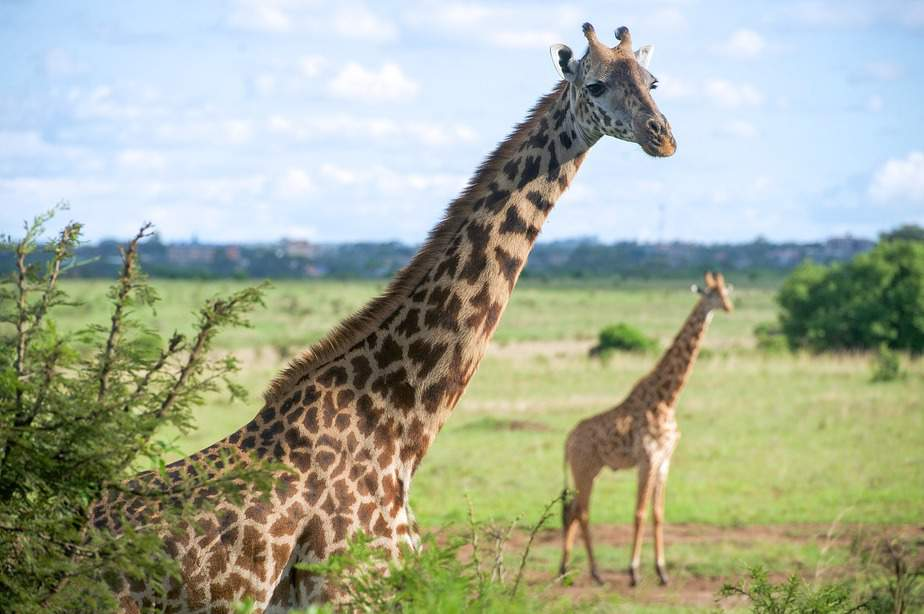 BNA> Nairobi, Kenya: Flight & 14 nights: $818- Feb-Apr (Including Spring Break)