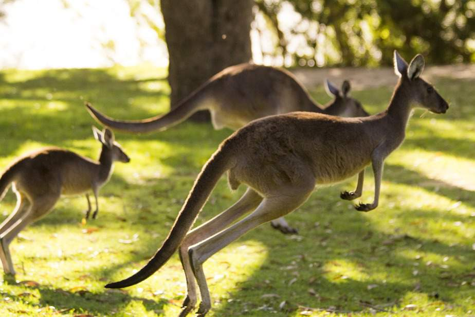 SFO> Brisbane, Australia: Flight & 5 nights: $879- Feb-Apr (Including Spring Break)