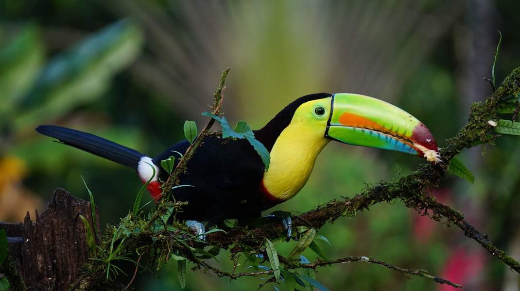 IND> San Jose, Costa Rica: Flight & 8 nights: $427- Apr-Jun