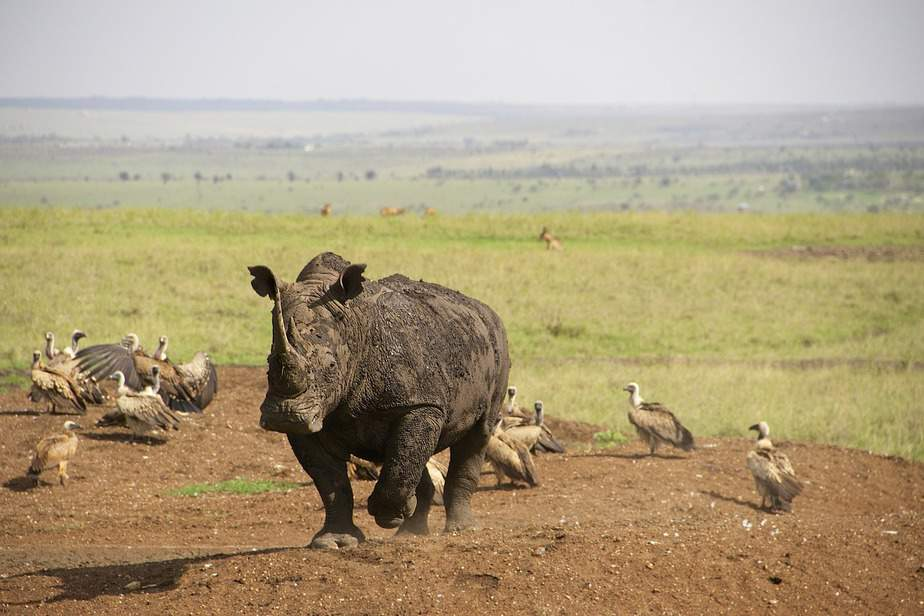 BNA> Nairobi, Kenya: Flight & 14 nights: $1,028- Mar-May