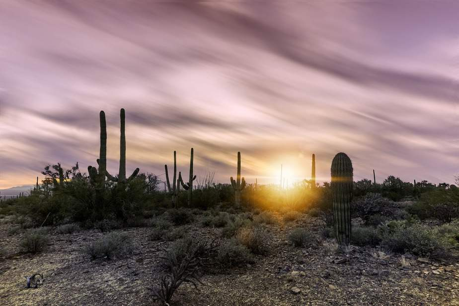 MSP> Phoenix, Arizona: $117 round-trip – Mar-May