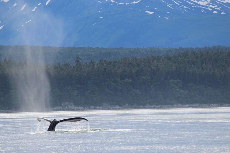 PHX> Fairbanks, Alaska: $417 round-trip – Apr-Jun (Including Summer Break)