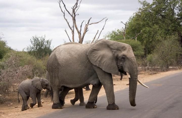 Reisdagboek Zuid Afrika – Safari in Krugerpark