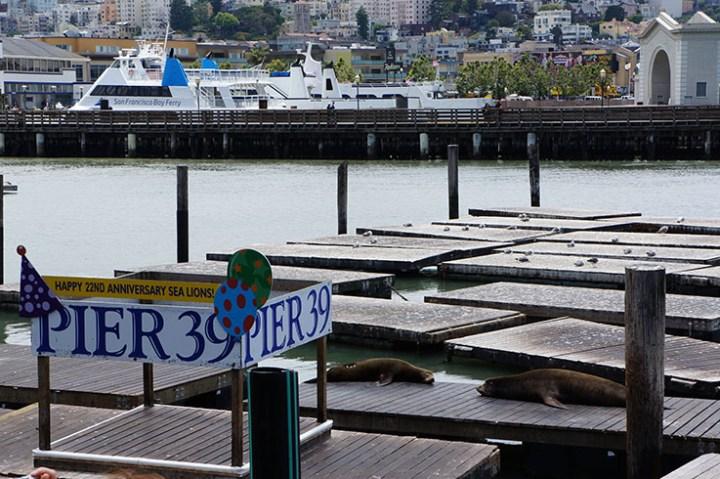 San Fransisco zeeleeuwen fishermans warf