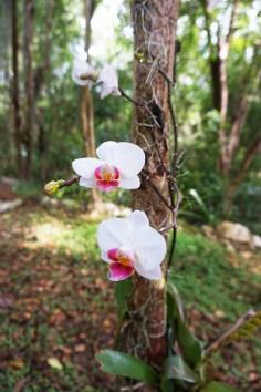 Hoyo Azul Dominicaanse Republiek orchidee