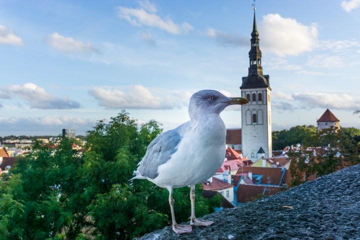 Tallinn-Estland-Kohtuotsa
