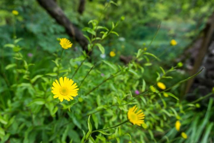nationaal-park-kroatie-bloemen