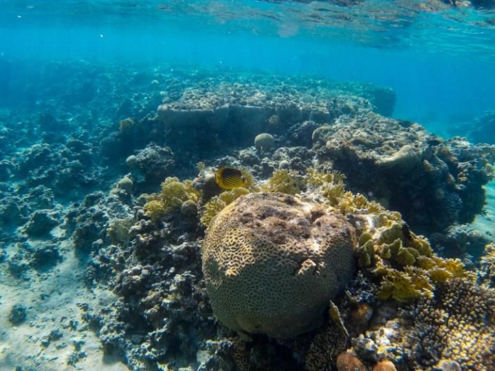 Snorkelen in Aqaba
