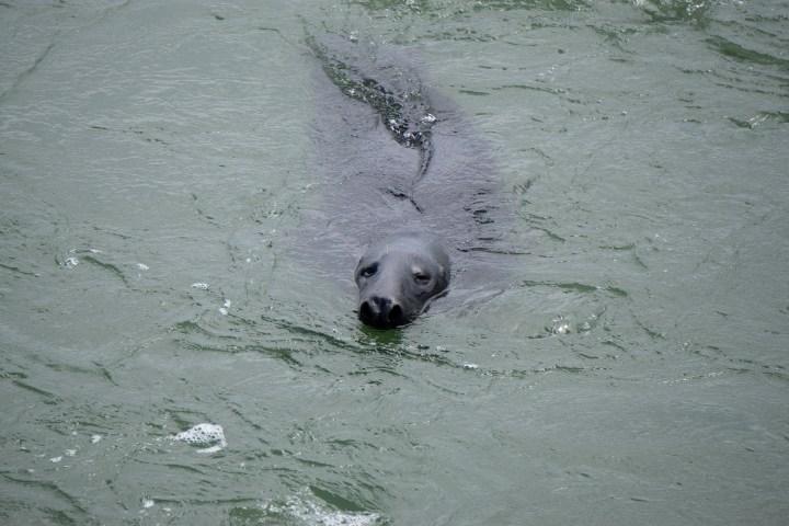 Zeehonden Brouwersdam, Zeeland